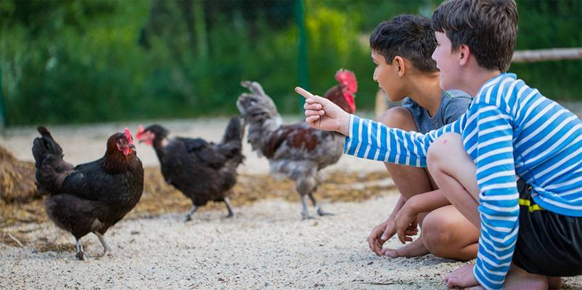 Boys with chicken