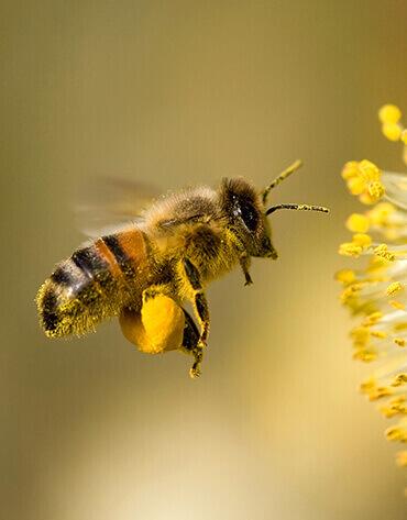 Michaelshof Sammatz, Haus der Natur, Seminar-Rückblick-Teaser, Wildbienen fördern!   Mai 2019