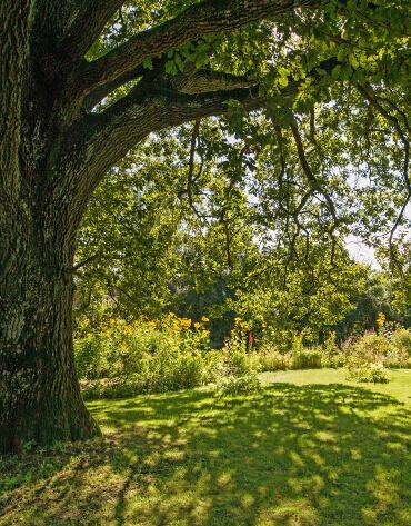 Michaelshof Sammatz, House of Nature, Seminar review teaser, Native Trees and shrubs - Summer