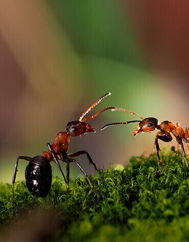 Michaelshof Sammatz, Haus der Natur, Event-Rückblick-Teaser, Ameisen