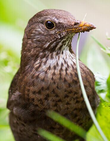 Michaelshof Sammatz - Seminar - Avifaune - Erstaunliches über unsere Vogelwelt