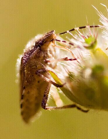 Michaelshof Sammatz - Seminar - Insekten - Charakteristik einer Tierklasse