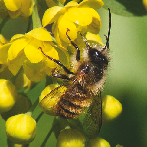 Michaelshof Sammatz | Seminare | Wildbienen entdecken - Bestimmungskurs