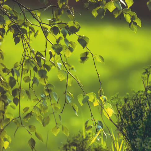 Michaelshof Sammatz | Seminare | Heimische Bäume und Sträucher im Wandel der Jahreszeit - Sommer